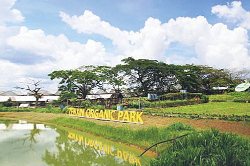 Zenxin Agriculture